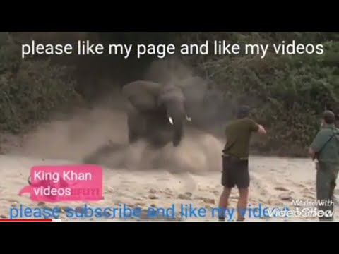 Buffalo elephant leopard and Turkey dove full slow motion hunting video 2018