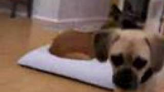 Need House Training For Your Dog? Dog Camp San Diego & Temecula