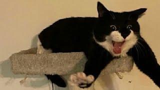 ПРИКОЛЫ С ЖИВОТНЫМИ 😺🐶 Смешные Животные Собаки Смешные Коты Приколы с котами Забавные Животные #130