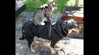ПРИКОЛЫ С КОТАМИ И СОБАКАМИ 2021 Приколы со смешными животными Смешные котики Подборка 4