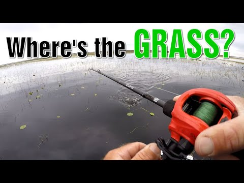 Is There Any Any Grass Left In Lake Toho   Bass Fishing