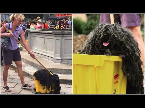 Is that mop or what ? See the best pet costume you will ever see