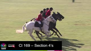 2019 Section 4's | Horses In Action | Royal Adelaide Show