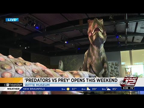 Interactive, animatronic dinosaur exhibit opening at Witte Museum