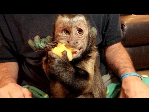 Monkey PLUM CRAZY Fun!