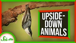 6 Animals That Thrive Upside-Down