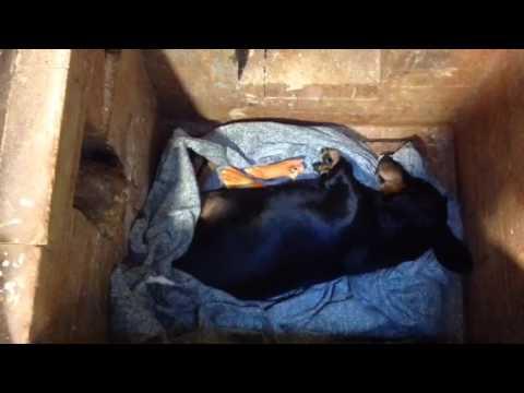 Вопрос: Кремация домашних животных общая и индивидуальная, какие плюсы и минусы?