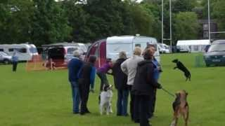 Preston & Fylde Gsd Obedience Dog Show - Race Night June 2013