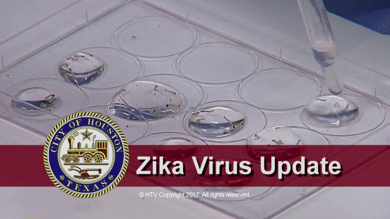Is Zika Virus Something You Need To Worry About This Summer?