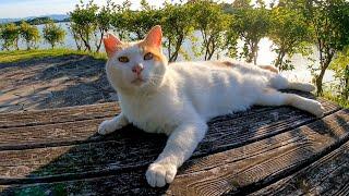 公園のベンチに野良猫が座っていたので隣に座ってナデナデしてきた