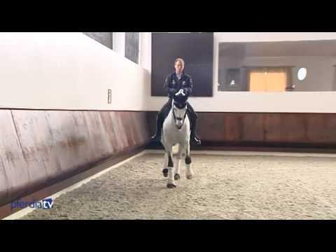 Dressurmäßige Arbeit & Trainingsphilosophie | Working Equitation | Pedro Torres