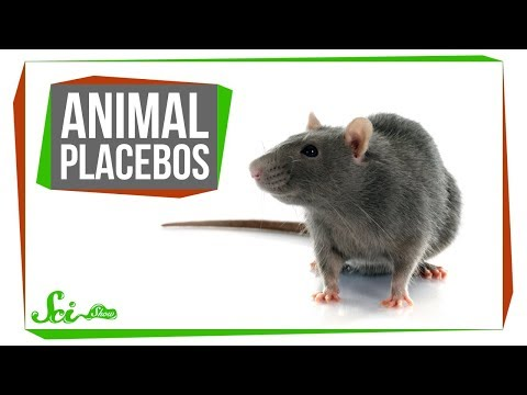 Do Placebos Work For Animals? Yes, Weirdly Enough