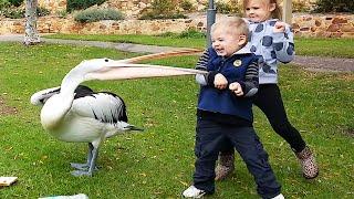 Es peligroso mirar Puedes morir de risa 2020 😂 Niños y animales en el zoológico se divierten juntos