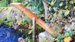 12月に入ってからも穏やかな小春日和の日々があり、初冬の庭と数少ない...