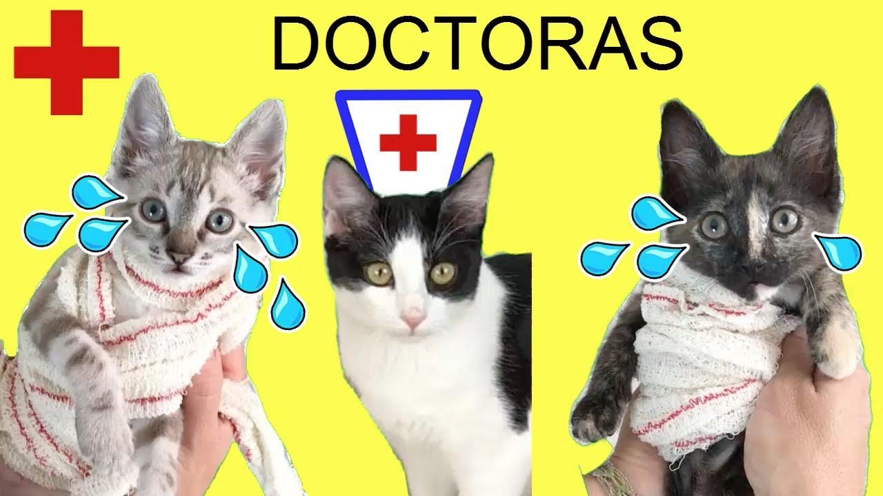 Mis nuevos gatitos se lastiman y los gatos Luna y Estrella los cuidan en casa / Cute Kittens