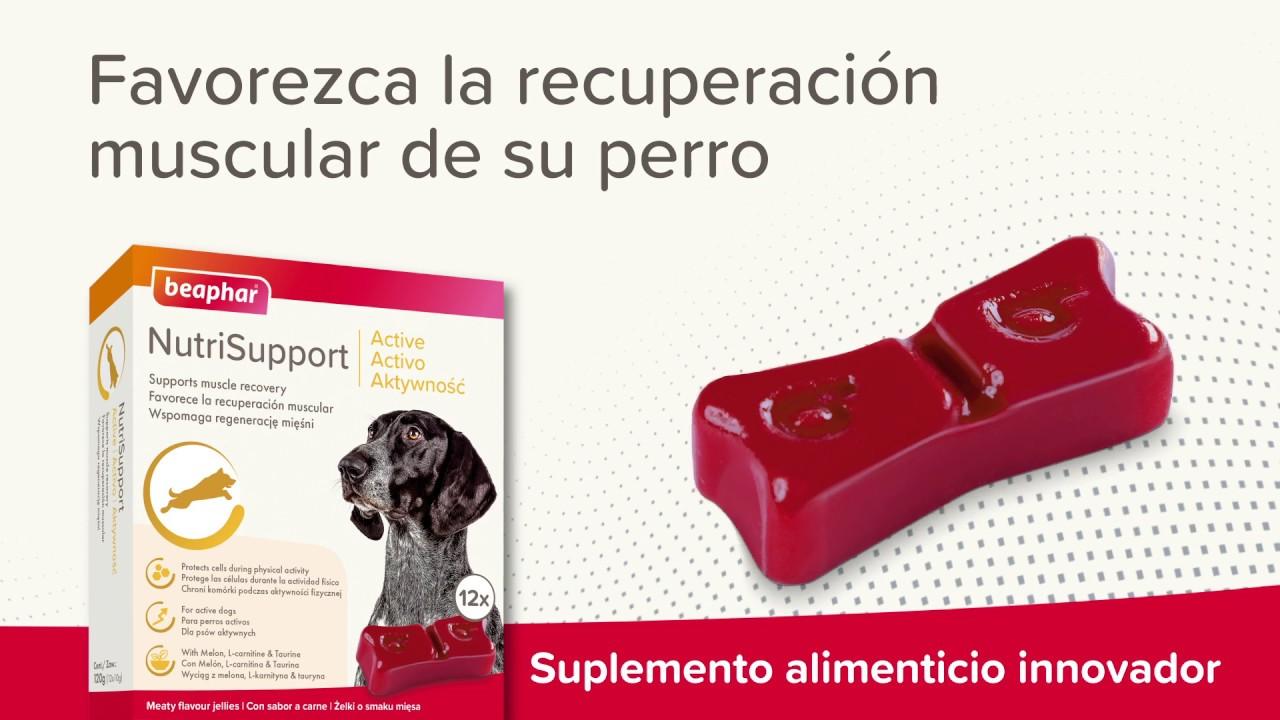 Suplemento alimenticio para perros activos Beaphar Nutrisupport