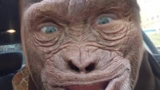 Планета обезьян смотреть онлайн бесплатно