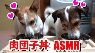 手作り餃子の焼ける音[ASMR](餃子は野菜多めです) ・カイの咀嚼音[ASMR]...