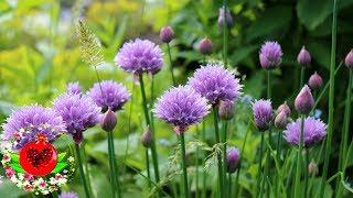 Убейте 13 различных инфекций и 14 видов рака с помощью этого растения!
