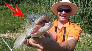 СУДАКИ и ЩУКА РВУТ ЭТУ ПРИМАНКУ Рыбалка в жару 35 на спиннинг