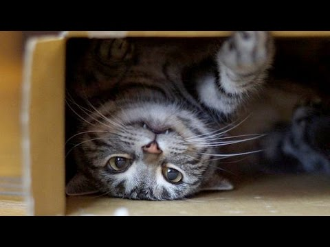 World's funniest cats and their best moments - Funny cat ...