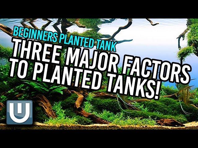 Planted Tanks - The Three Major Factors   Part 2