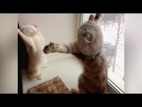PREPARE to LAUGH ALL DAY! // Super FUNNY ANIMAL VIDEOS compilation