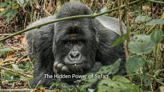 Michelle Richmond | the Power of Intuition, Gorillas of the Congo