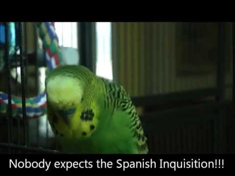 Nobody Expects a Bird to Quote Monty Python!
