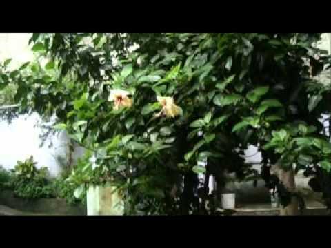 BHOR Short Film by KAS Films