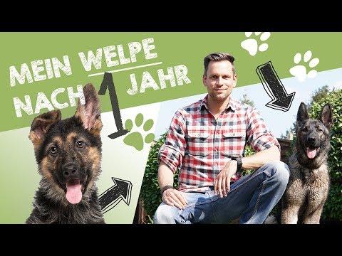 Mein Deutscher Schäferhund Welpe Nora  nach 1 Jahr   Entwicklung, Charakter & Training