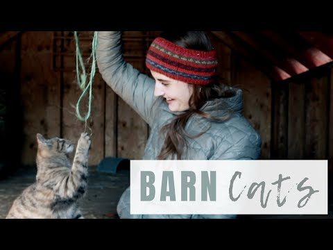 Best Pest Control For Rodents? | Adding Barn Cats To The Farm