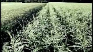 Farm to Market: Rice and Corn (clips)