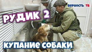 Рудик 2: Купание собаки