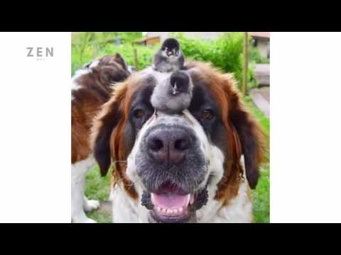 Funny Pictures Funny Dog Pictures Funny Dog Photos 2017 try not to laugh funny videos
