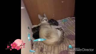 Os meus gatinhos bebés