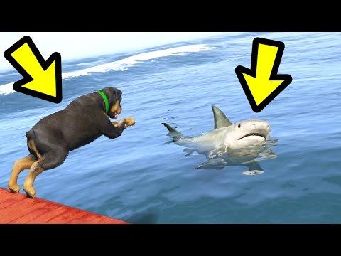 GTA 5 - Chop vs. Shark! (Who Survives?)