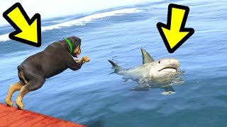 GTA 5 - Chop vs. Shark! (Who Survives?)