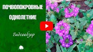 видео Бордюрные цветы: подбор низкорослых многолетников и однолетников