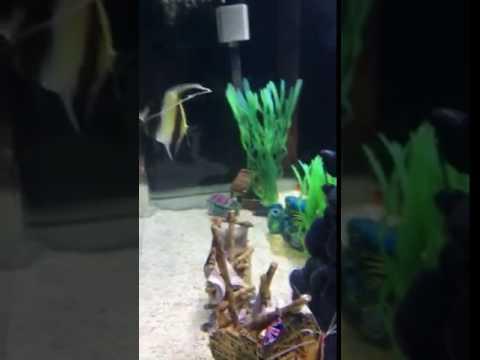 Adventures in Japan: aquarium visit