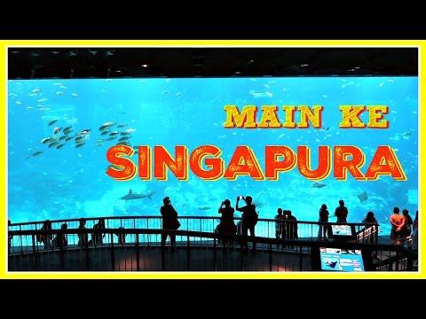 main-ke-singapura-|-s.e.a.-aquarium-|-matthera
