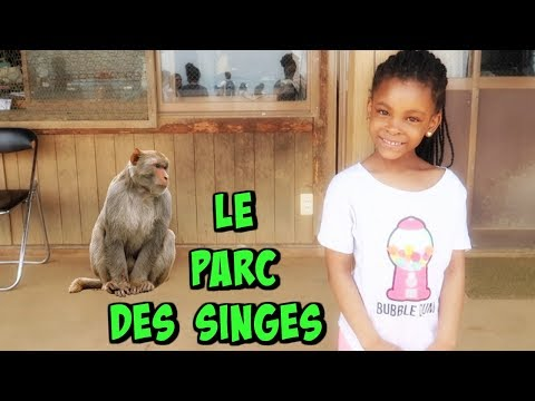 ON DONNE A MANGER AUX SINGES ,Vlog Japon