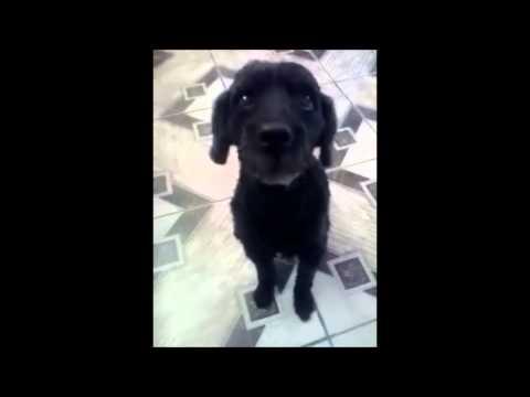 Vine Dog Wakanda