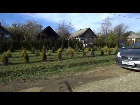 Жизнь на Кубани.Поездка в питомник х.Заречный Белореченского района