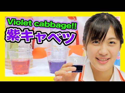 10の手順で自由研究紫キャベツで実験しよう科学実験