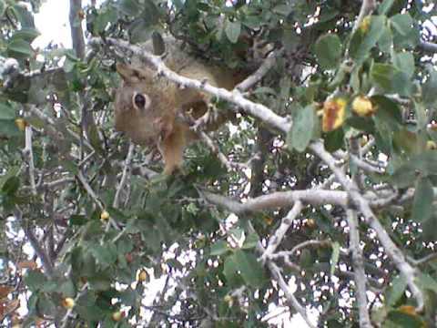Squirrel @ Grand Canyon