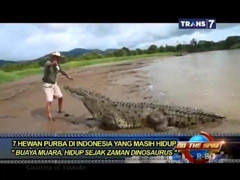 on the spot 7 hewan purba di indonesia yang masih hidup youtube rh youtube com