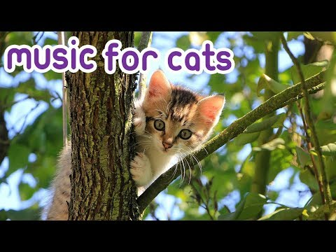 Calming Music for Stressed out Cats and Kittens!
