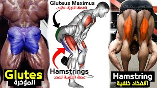 Booty \u0026 Hamstring Workout at Home  Hip Dips Fix