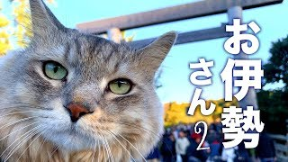 Cats are allowed in Ise Shrine?/ 猫、伊勢神宮入れる?入れない?